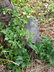 047 - Athenian Tortoise (Scott Shetrone) Tags: animals other graveyards turtle events places athens greece 5th reptiles kerameikos anniversaries