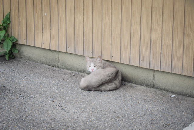 Today's Cat@2013-06-02