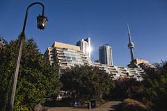 Toronto Music Garden (Mark Heine Photos) Tags: morning toronto ontario canada cntower waterfront harbour sunny harbourfront lakeontario queensquay torontomusicgarden markheine