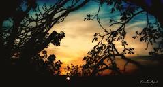 Traumwelt.. (cornelia_auguste) Tags: kreativ traum trume traumwelt filterexperiment filtertechnik filter sonnenuntergang sonne bume abenddmmerung abendlicht abendstunde abendsonne abendrot orange