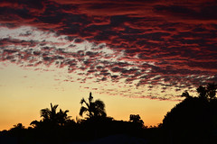 Lastdaysofwinter (Images by Jeff - from the sea) Tags: nikon d7200 dusk twilight trees sky palmtrees redsunset red yellow yellowsunset sunset tamron tamronsp2470mmf28divcusd bundaberg bamboo mangotree clouds august 2016 2470mm 500v20f 1000v40f
