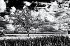Hide-and-seek... (Ody on the mount) Tags: abendlicht anlsse bume felder fototour himmel pflanzen wolken bw monochrome sw