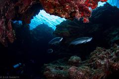 Grand Cayman (jcl8888) Tags: scuba cayman nikon d7200 nauticam tokina 1017mm travel diving nature fish cavern