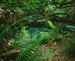Juniper Springs (GOJR.) Tags: film inexplore 120 ocala junipersprings 6x7 analog mediumformat mamiyasekorc50mmf45 mamiyarb67pros velvia50