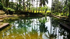 Reflection (radhkrishna) Tags: reflection pond ramanthali kulam  water nature kerala india kannur  adikulam