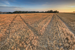 Morning (Rod Martins Photography) Tags: autumn morning uk wymondham corn cut fields harvset leadingline norfolk perspective sky sun sunrise tramlines trees
