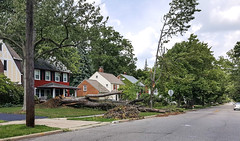 downed tree - Yellowstone Road - Cleveland Heights microburst - 2016-08-20 (Tim Evanson) Tags: clevelandheightsohio clevelandheightsmicroburst weather trees myhouse