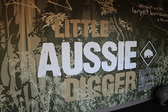 Darling Harbour - Wild Life Sydney Zoo (lukedrich_photography) Tags: australia oz commonwealth        newsouthwales nsw canon t6i canont6i history culture sydney       metro city darling harbour cbd centralbusinessdistrict wildlife zoo australian animal adventure tourist site mammal little aussie digger wombat