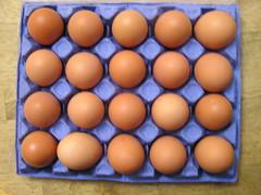 Piggotts Riverside Poultry Farm 20 Large Hen Eggs 2 x 3.39 13092016 29-08-2016 - Box 2 (Lord Inquisitor) Tags: piggotts hen eggs large heneggs eggcarton 13092016