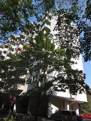 1977 Berlin-W. Apartment-Wohnhochhaus 8Et./144WE mit Dachterrasse Rohrdamm 56 in 13629 Siemensstadt (Bergfels) Tags: architekturfhrer bergfels 1977 1970er 20jh westberlin berlin apartmentwohnhochhaus wohnanlage siedlung mfh 8et we dachterrasse rohrdamm 13629 siemensstadt spandau beschriftet berlinw
