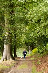 Footpath (Graham Dash) Tags: cobham painshill painshillpark surrey paths trees 2016pad