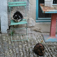 Les chats de Lacoste. (Claudia Sc.) Tags: france provence lubron lacoste chat cat village