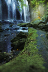 Moss (and waterfall) (ximski) Tags: sigma sigma18300mm sdquattro foveon moss green     inawashiro fukushima waterfall