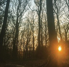 Mystical morning (lucycooper4) Tags: monmouth nature trees woods sunrise
