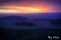 JPS walk in Stradford upon Avon-14.jpg (Defi90) Tags: morning reggelt ssz uk bradgatepark deer fall ssz