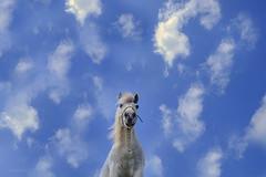 ---- (BorjaiGlesias) Tags: xt1 fujifilm sky cielo azul caballo
