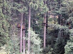 P8234096e (topzdk) Tags: treeclimbing summer 2016 czechrepublic ski slope lanovy park