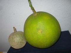 Elephantianaferonium & Lemon (mani_bhaskar23) Tags: elephantianaferonium lemon