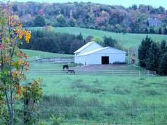 Caledon barn (Tayako2) Tags: fall contry canada goldenleaves river barnhill escarpment