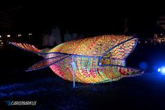 Leuchtender Wal (Carismarkus) Tags: beleuchtung berlin berlinleuchtet illumination licht lightning lights nacht wal