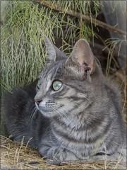 UNA DE GATOS 04 (BLAMANTI) Tags: gatos mascotas felinos