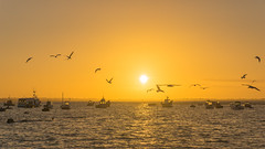 birds dancing  around the sunset (malkovitch) Tags: plouescat bretagne france