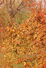 ast (obsequies) Tags: autumn fall harvest leaves bokeh colours colors canada manitoba forest mori trees shrubs colorful colourful love whimsy whimsical macro seasons change changing leaf patchwork rain magic magical home country chic cottage