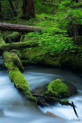 Tumble (jpeder55) Tags: littlezigzag mthood fujifilm green jpedersenphotography landscape nature spring water watermotion wilderness