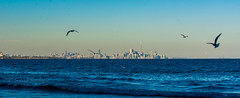 DSC_6586 (Sohail-Siddique) Tags: water blue skyline clouds birds seagulls toronot nature structure building cntower attractions lake river lakeshore mississauga view landscape colours sohail nikon d7100 canada