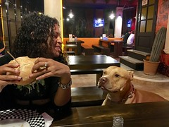"""He wasn't happy until he managed that I gave him the half of my burger...and then he disappeared when I had to pay the bill. Not fair. Lol 😜😂 Mallorca. Spain. Oct 2016 #itravelanddance • <a style=""""font-size:0.8em;"""" href=""""http://www.flickr.com/photos/147943715@N05/30242754936/"""" target=""""_blank"""">View on Flickr</a>"""