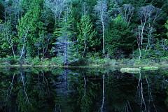 Silent forest (Teruhide Tomori) Tags: light autumn nature landscape japan nagano norikura mtnorikura       water reflection tree clouds chbusangakunationalpark  forest ushitomepond  green