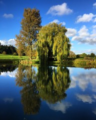 Pond Reflections (Marc Sayce) Tags: pond reflections east worldham hampshire south downs national park hangers way autumn 2016 trees willow clouds