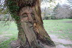 The Face, Clyne Gardens (WilliamWWD) Tags: face clyne gardens carving wood