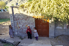Banksia roses in full bloom at a local house, Gilgit, Pakistan (inchiki tour) Tags: travel photo film pakistan     flowers pakistani  gilgit  banksiarose
