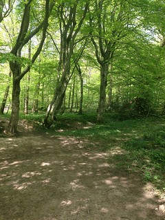 Abbotts wood 18/05/13