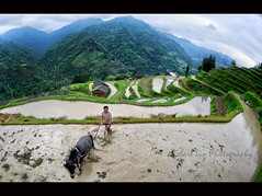I have a dream (Robert Lio) Tags: china mountains rice terrace dream farmer guizhou