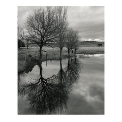 Eight Trees (GrisFroid) Tags: trees landscape reflections water monochrome pentax 645d