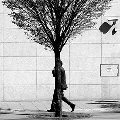 The hidden man (pascalcolin1) Tags: paris13 homme man cach hidden arbre tree camera ombre shadow lumire light soliel sun derrire behind photoderue streetview urbanarte noiretblanc blackandwhite photopascalcolin carr square