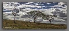 NUBES  NO  SERTO. (manxelalvarez) Tags: serto bahia brasil nubes cielos paisajes paisaxesdosertao
