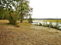 Lvnsbadet nude beach at the lake Yngern (Flicker Classic Person) Tags: yngern lvnsbadet beach strand naturist nudist fkk sdertlje nykvarn sweden sverige safe 2016