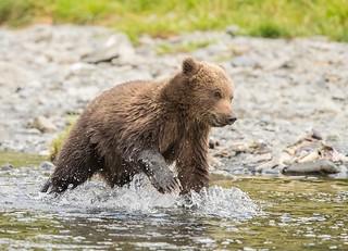 Little Fishing Bear (Explored)