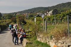 sDSC_0060 (L.Karnas) Tags: wien vienna wiede    viena vienne autumn austria sterreich herbst 2016 weinwandertag wein wander tag wanderung wine wandering neustift am walde