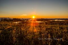 20160828-IMG_7758-WM (Pamela McLellan Zmija) Tags: saugeenshores portelgin sunset beach lakehuron pamelamclellanzmija goblesgrove sunshine