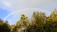 Spring weather (Sandy Austin) Tags: panasoniclumixdmcfz70 sandyaustin auckland massey westauckland newzealand northisland weather rainbow