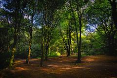 Shadows and Light 6 (JodBart) Tags: woodlandtrust billinge wigan trees green shadows light fuji manuallens