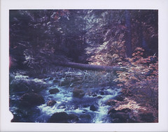 Cold Spring Creek, Mt. Hood National Forest, Oregon. (feedmyhungryeye) Tags: polaroid forest mthood type100 day1 polaroidweek 669 expired