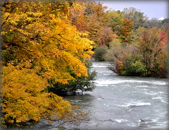 The trees are aflame (mala singh) Tags: colours fall autumn trees river water usa northamerica