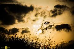 Incendio platamona (16) (Autolavaggiobatman) Tags: canadair fuoco incendio platamona pineta elicottero stagno fiamme fumo mare sardegna