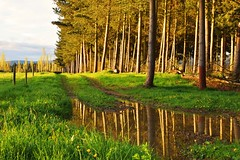 Down in the woods tonight (Gadgetman@Nikon) Tags: elements waimatecanterburynewzealand outinthewoodstonight reflection mirror mirrorimage dof light beautifullight farmscape nikon nikond3300 35mm meechin stunning differentreflections interesting new newzealand rural