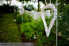 PLW_5602 (Laszlo Perger) Tags: wien vienna sterreich austria blumengarten hirschstetten flowergarden